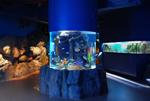 معرض الصورمربئالشارقه للاحياء (04)24-07-2008-SMD-c